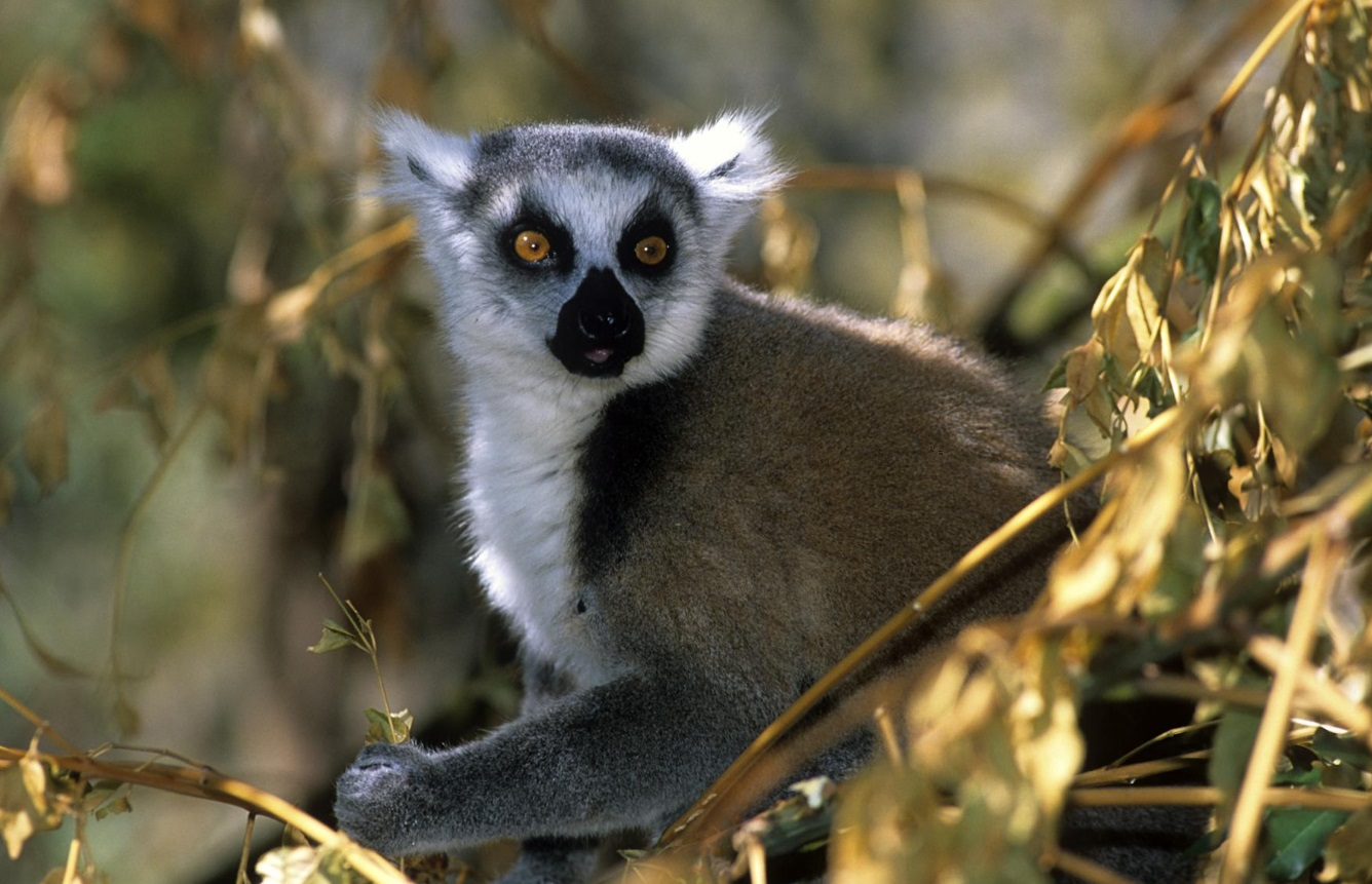 parc isalo lémuriens madagascar